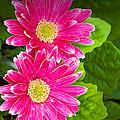 Flower 3 by Walter Herrit