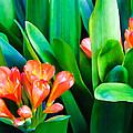 Flower 40 by Dawn Eshelman
