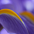 Flower Abstraction by Juergen Roth