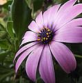 Flower by Ana Cardenas