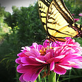Flower And Butterfly by Nicola Nobile