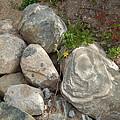 Flower And Rocks by Susan Wyman