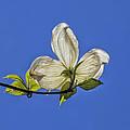 Flower And Sky by Robert Ullmann