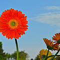 Flower And The Sky by Dragan Kudjerski