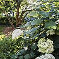 Flower And Tree At Msu by John McGraw