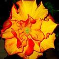 Flower by Ania Kaka