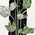 Flower Anthurium 02 Elena Yakubovich by Elena Yakubovich