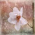 Flower Art - Nature Reminds Us by Jordan Blackstone