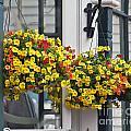 Flower Baskets  by Howard Stapleton