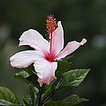 Flower by Bellaco Blog