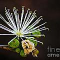 Flower by Ben Yassa