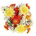 Flower Bouquet by Elena Elisseeva