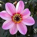 Flower by Brigitte Mueller