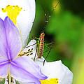 Flower Bug - I by April Dunlap