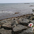 Flower By The Sea by Robert Nickologianis