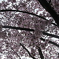 Flower Canopy And Sky by Tina M Wenger