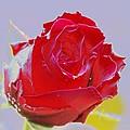 Flower by Carol Lynch