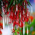 Flower Chandelier by Augusta Stylianou