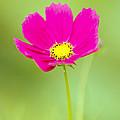 Flower - Closeup by Susie Hoffpauir