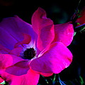 Flower Continuum  by Walter  Holland
