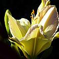 Flower by Cynthia Porter
