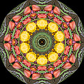 Flower Drum by Valerie Bruno