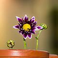 Flower Family by Manjurul Morshed