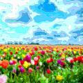 Flower Field by Mary Clanahan