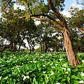 Flower Field - South Western Australia by Daniel Carr