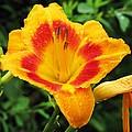 Flower Garden 05 by Pamela Critchlow