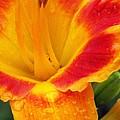 Flower Garden 06 by Pamela Critchlow