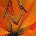 Flower Garden 24 by Pamela Critchlow
