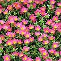 Flower Garden 36 by Pamela Critchlow