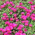 Flower Garden 38 by Pamela Critchlow
