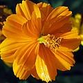Flower Garden 43 by Pamela Critchlow