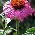 Flower Garden 48 by Pamela Critchlow