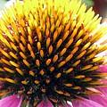 Flower Garden 49 by Pamela Critchlow