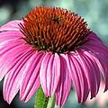 Flower Garden 50 by Pamela Critchlow