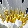 Flower Garden 55 by Pamela Critchlow