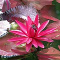 Flower Garden 66 by Pamela Critchlow