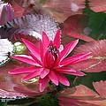 Flower Garden 67 by Pamela Critchlow
