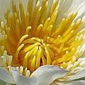 Flower Garden 68 by Pamela Critchlow