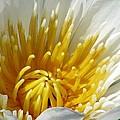Flower Garden 69 by Pamela Critchlow