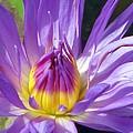 Flower Garden 70 by Pamela Critchlow