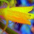 Flower - Garden - Cucumber by Susan Carella