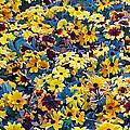 Flower Garden by Ernie Echols