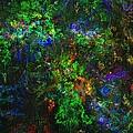 Flower Garden Gone Wild by David Lane