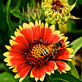 Flower Garden by Frozen in Time Fine Art Photography