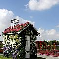 Flower Garden by Sanjeewa Marasinghe