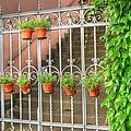 Flower Gates by Linda Covino